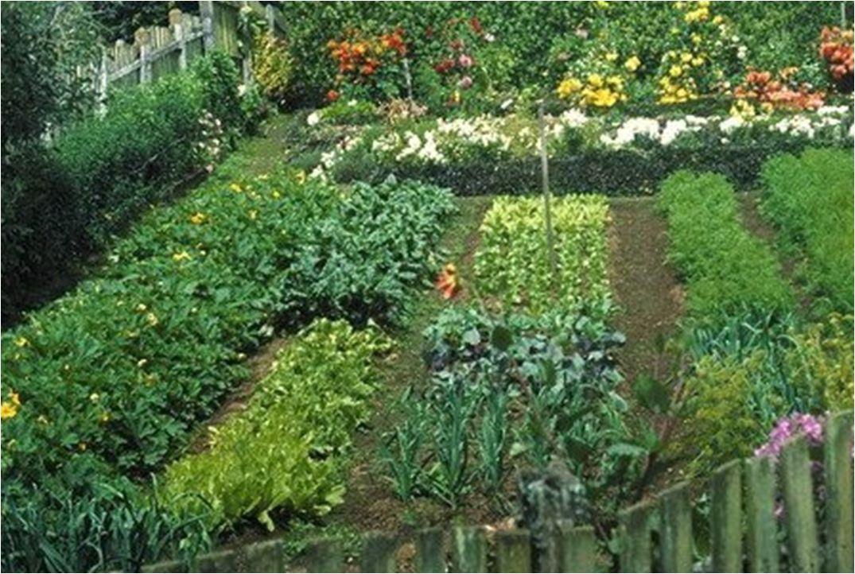 Talleres en la jard n durante febrero callejeando - Plantas de huerto ...