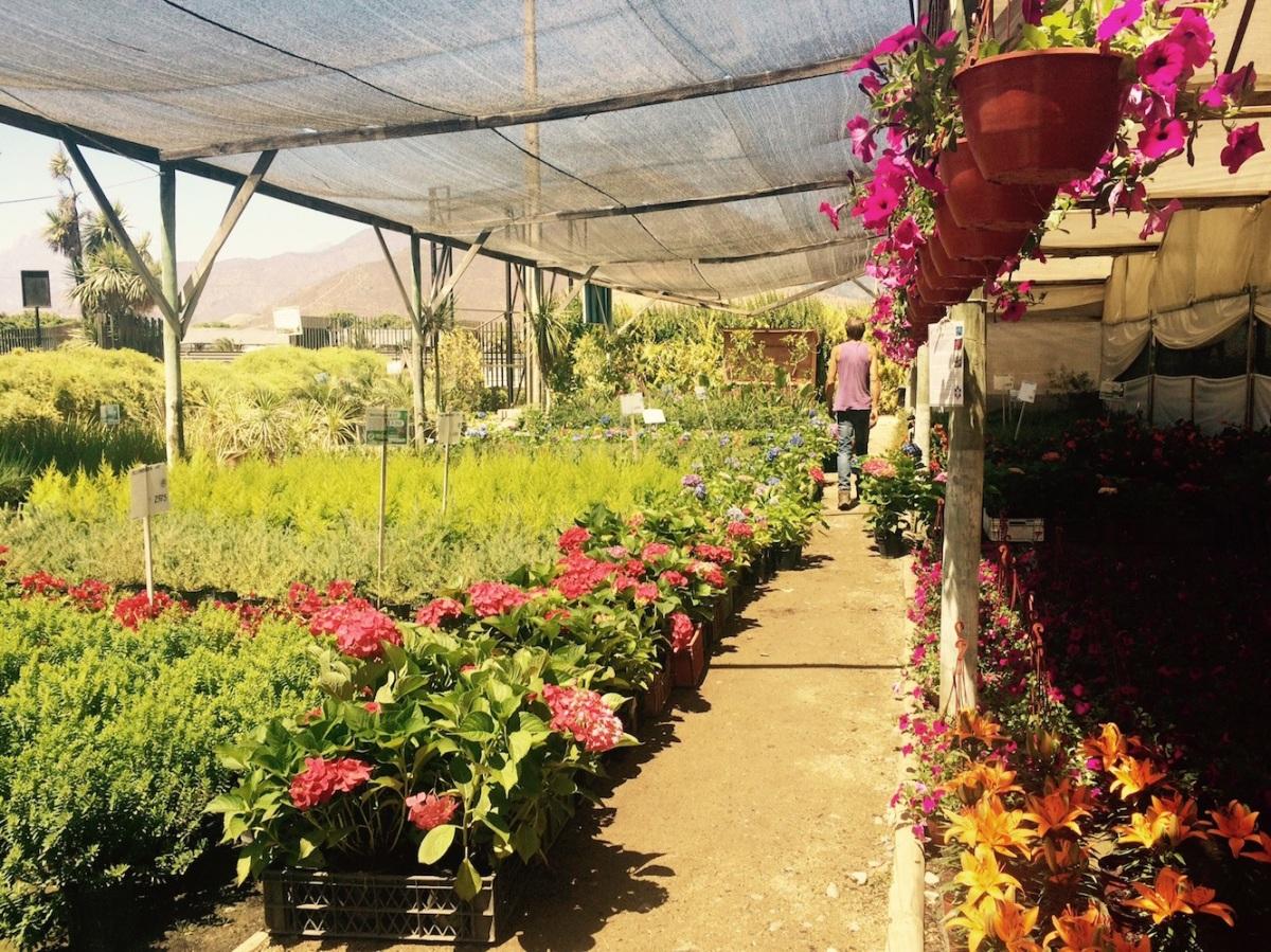viveros hijuelas flores y plantas imprescindibles